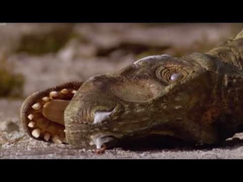 Dinosaur Death - Walking with Dinosaurs in HQ - BBC