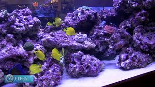 Aquacultured Fish Talk -Why aquacultured fish are important to the hobby and local stores