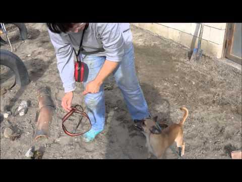 Animalinneed: Lola the Chihuahua