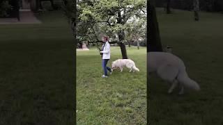 Education canine éthologique -Stage Intensif Ghost - Marche sans laisse
