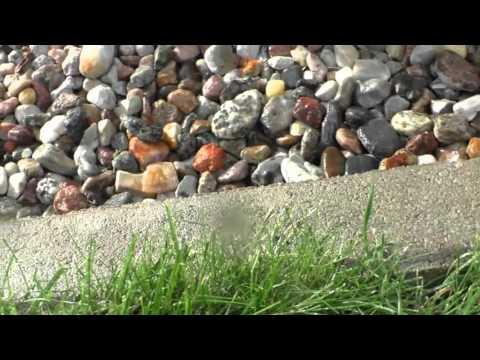 Gartenbewässerung- Wie Funktionieren Versenkregner