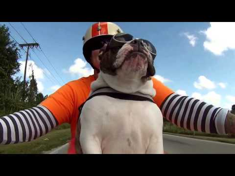 AWESOME biker dog on motorcycle waving at other bikers
