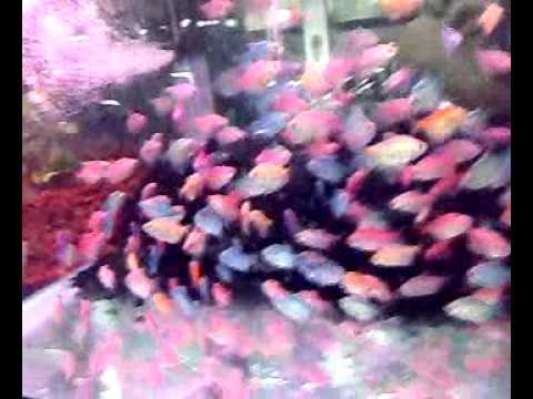 Diese erstaunliche entdeckung for Pileta con peces