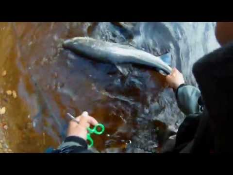 Turning torso - fly fishing fr sea trout in the Mrrumriver
