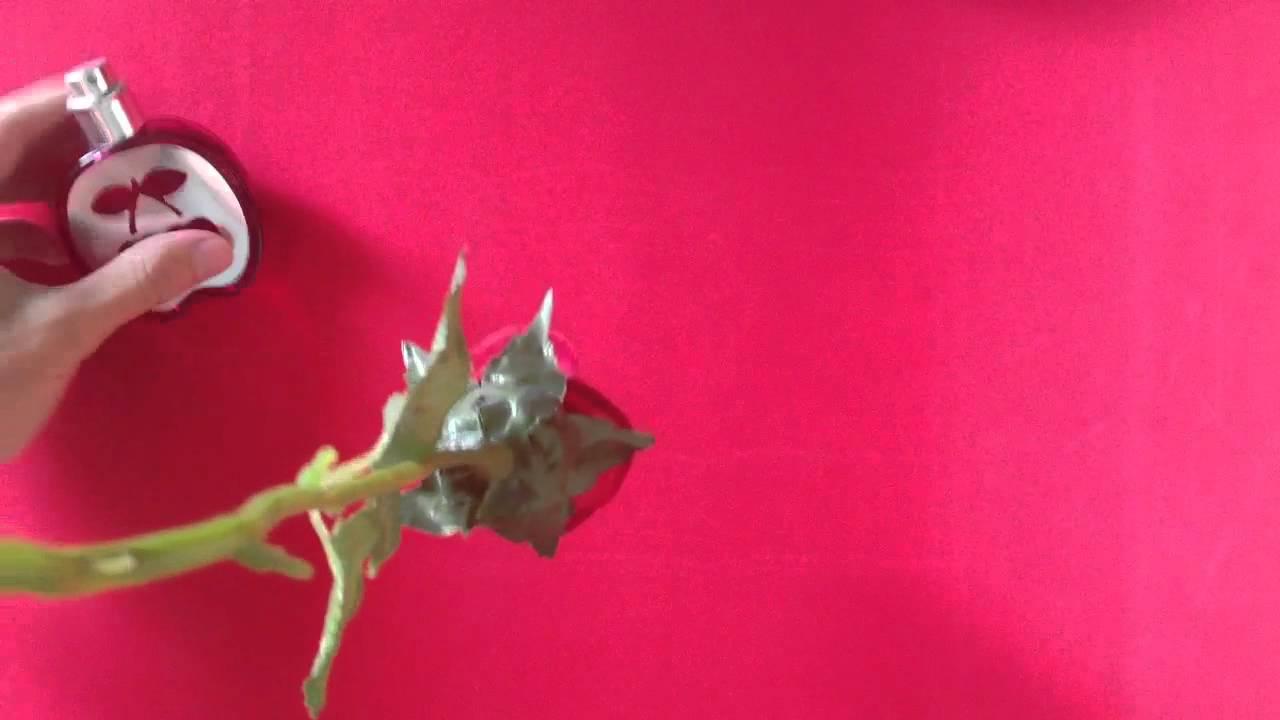C mo secar rosas correctamente c mo secar una rosa o una - Como secar una rosa ...
