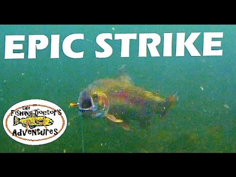 GoPro Amazing Underwater Rainbow Trout Attack