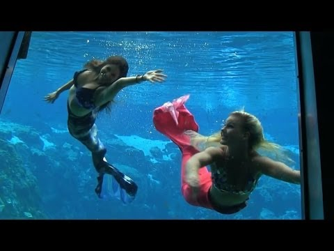 See live mermaids daily at Weeki Wachee Springs State Park