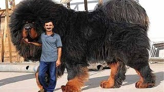 10 Strongest Dogs in the World