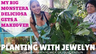 Planting with Jewelyn: Giving my Big Monstera Deliciosa a makeover | October 2018 | ILOVEJEWELYN