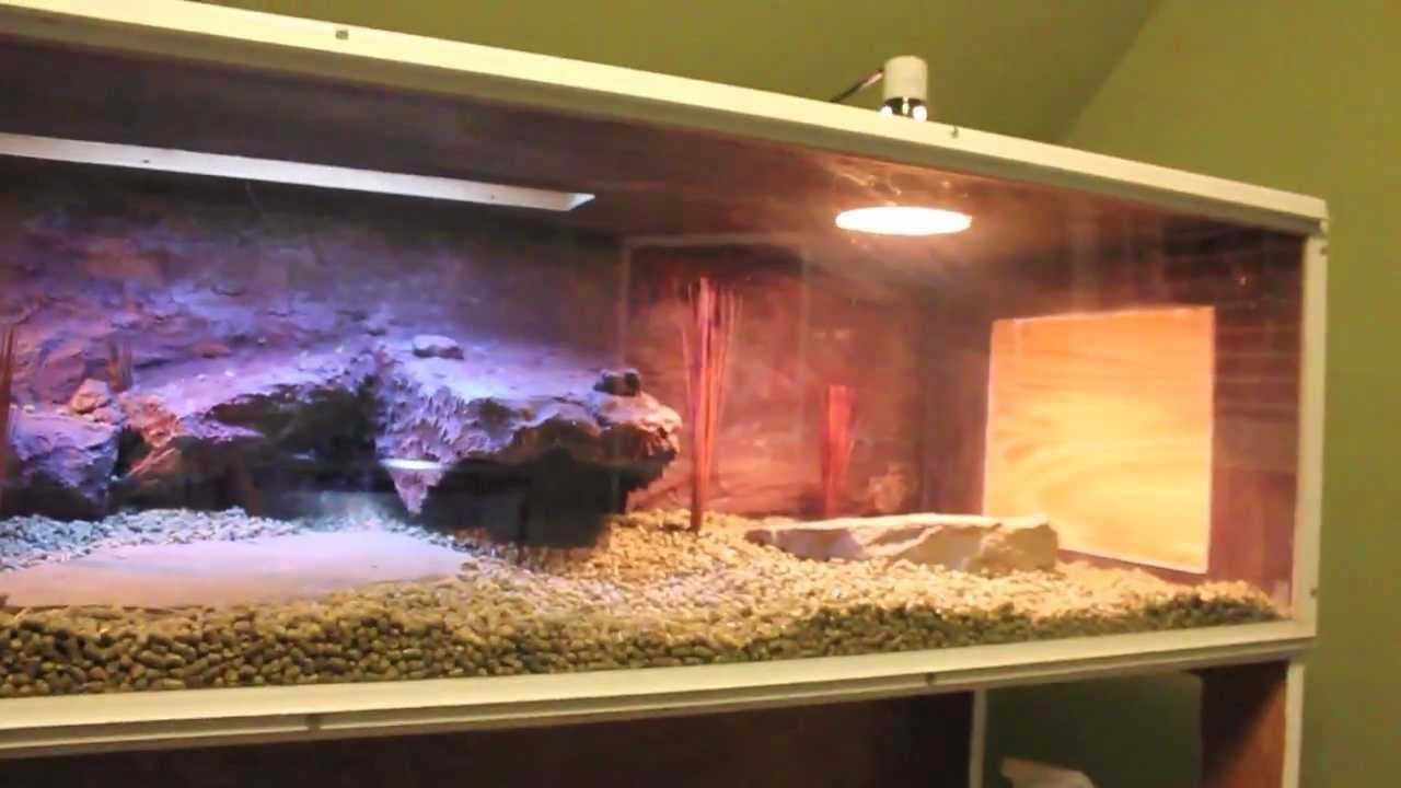 Custom Bearded Dragon Enclosure WITH BACKGROUND YouTube