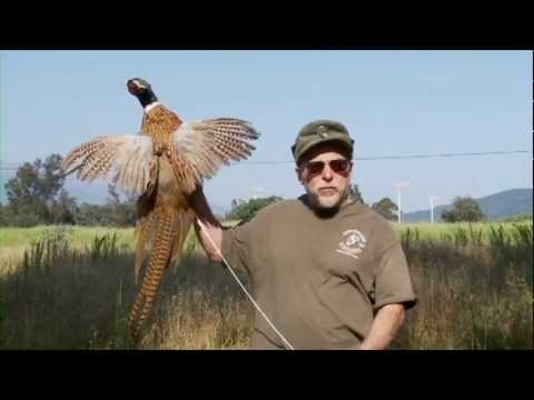 Official Ojai Valley Taxidermy TV Commercial
