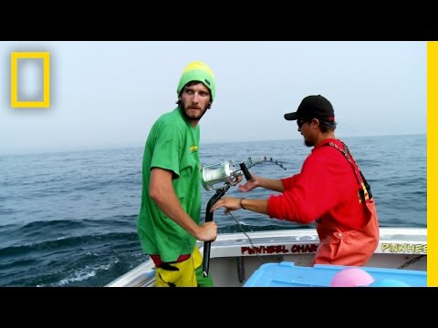 Smart Fish | Wicked Tuna