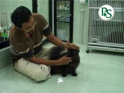 Pengenalan & Pemeliharaan Kucing