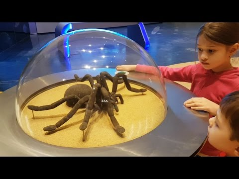 Family fun ride at Children's City Museum. Kids pretend playing. Video 2017