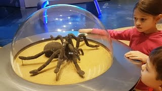 Download Family fun ride at Children's City Museum. Kids pretend playing. Video 2017 3Gp Mp4