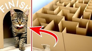 Download Song GIANT Maze Labyrinth for Cat Kittens. Can they EXIT? Free StafaMp3