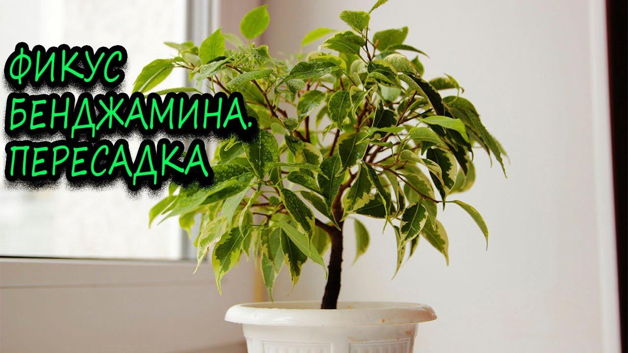 Выращивание комнатные растения 30