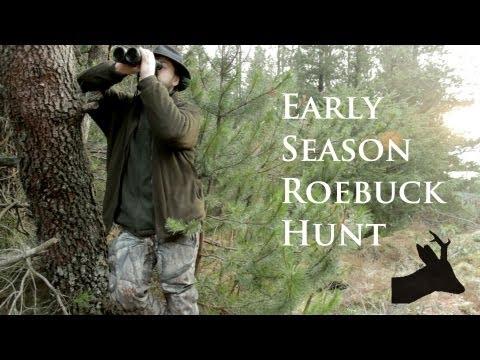 Early season roebuck. RoeStalker hunting roe deer in Scotland.