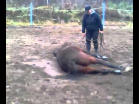 Nauka Pokładania Konia