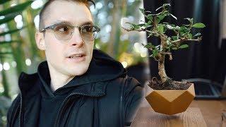 Летающее растение, снежный бег и другая флора