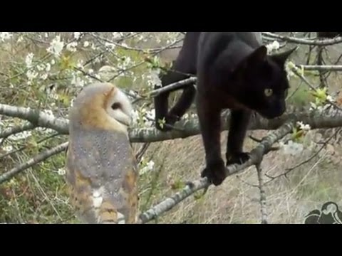 Distraction: Cat and owl become friends