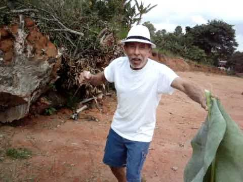 Indiana Sanchez in Brazil...looking for banana leaves