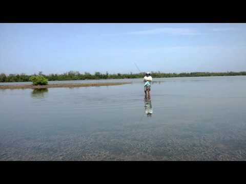 Fly Fishing Tailing Redfish Pine island Sound HD 1080P  - D's Knots