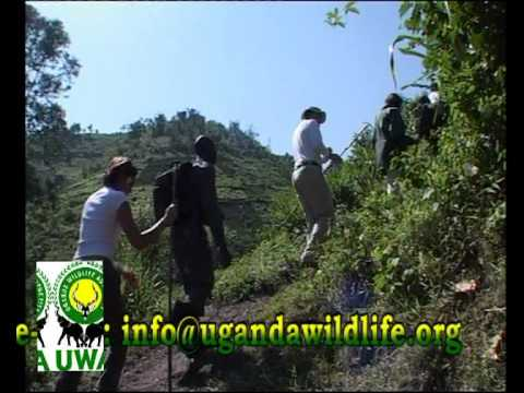 Bwindi Impenetrable National park.avi
