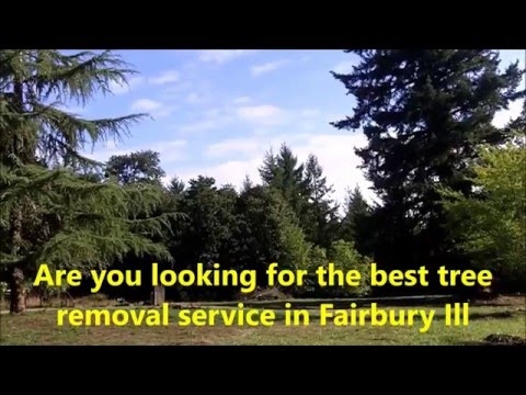 Tree Trimming | Tree Removal | Brush Removal| Land Clearing | Fairbury Il 61739