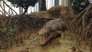 Sheikh Abdullah Al Salem Cultural Center - Natural History Museum (Ecosystems)