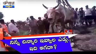 Cow Stuck Borewell in Nizamabad Akkuluru   Jordar news