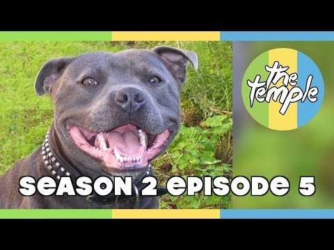 The Temple - S2e05 - Bestiality, The Matrix & Black History Month video