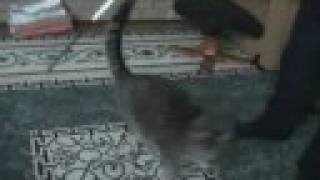 My Little Cat 8 (the Best Cat Video You