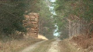 Forêt du Gâvre : les chasseurs à courre traqués