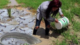Smart Girl Catching A Lot of Fish By Hand - Cambodia Traditional Fishing