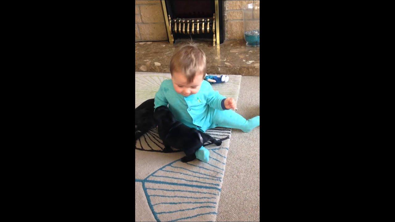 Kutyákkal játszó kisfiú az új sztár - videó