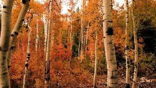 Cây cối mùa thu Cực đẹp HD