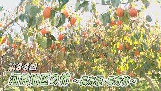 河井上柿生産組合の「長寿姫」と「長寿柿」です。どちらも甘く舌触りが良いと人気を集めています。※この番組は、今年11月に茂木町ケーブルテレビで放送されたものです。