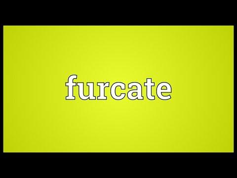 Header of furcate