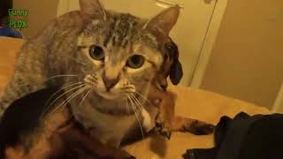 Funny Dogs Annoying Cats Compilation (2018)