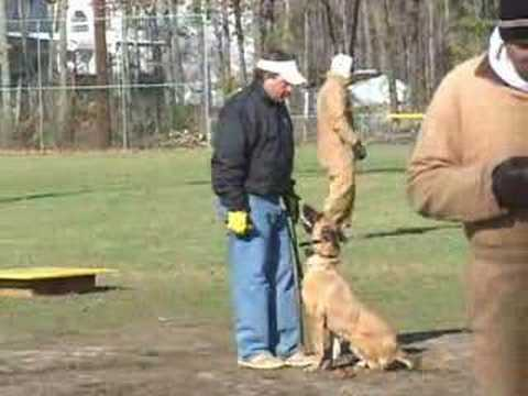 Police K9 dog training - Fred Hassen