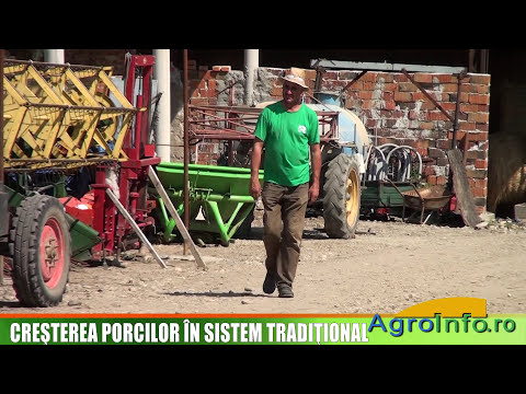 Cresterea porcilor in sistem traditional
