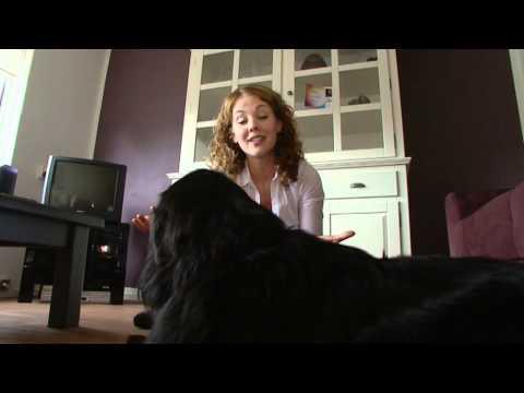 Els Basten Animal Communicator & Healer Reportage
