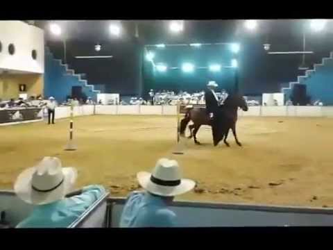 Galan del Rancho Gran Campeon Trote Galope Copa Santanderes Bucaramanga  Sep 19/2014   2014 New