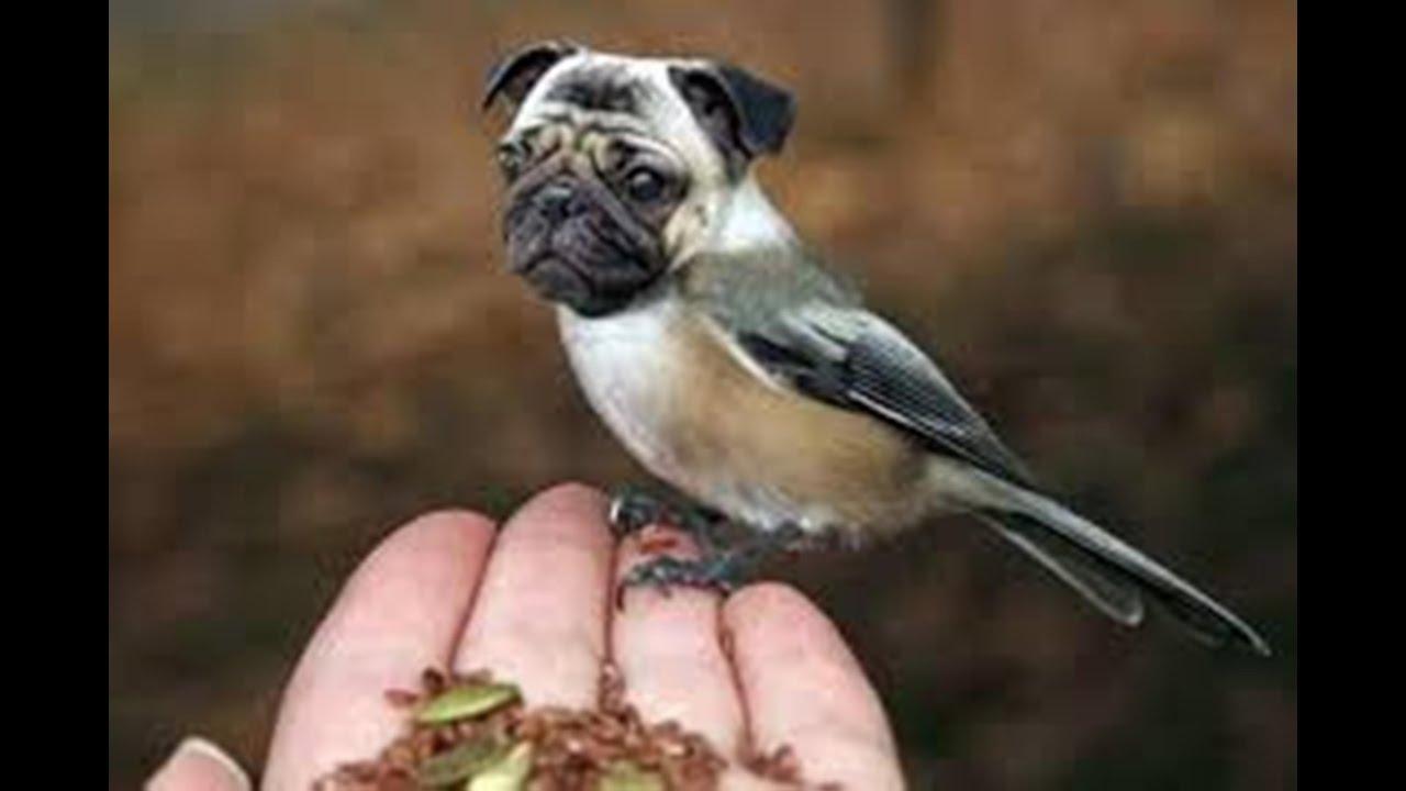 Half dog half bird