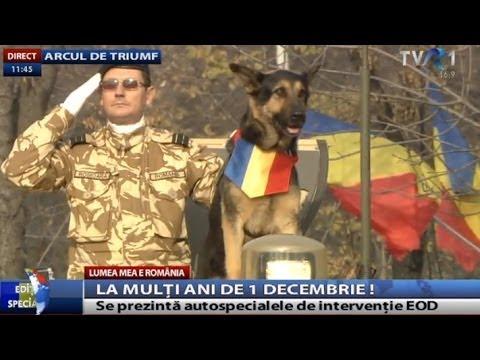 Parada Militară de 1 Decembrie: MAX câinele membru al grupului 2 EOD