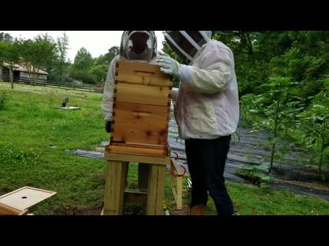 Beehive inspection gone plaid!