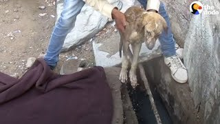 Sick Stray Puppy Heals Thanks To His Rescuers | The Dodo