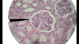Histology for Beginners