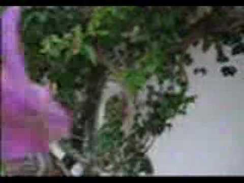 ... Kayden Kross Videos Page 1 – Kayden Kross Vid Clips – Kayden Kross
